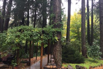 wedding venue harmony ridge lodge nevada city california 1